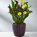 Color Inspirations Calla Lily