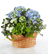 Whispers of Peace Sympathy Basket