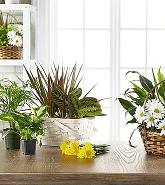 Les plantes en fleurs et plantes vertes dans un panier agencées par un fleuriste