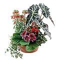 Arrangement of Plants for Indoor