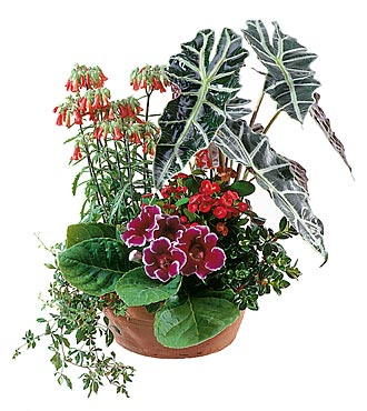 Arrangement of Plants for Indoor
