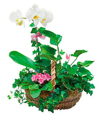 Basket Arrangement of Plants