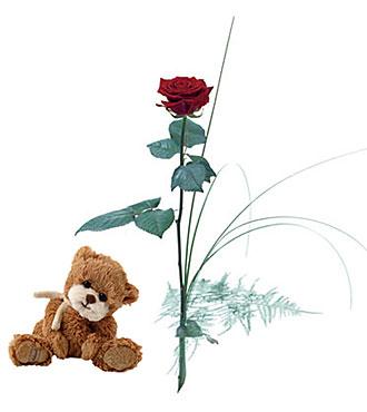 Single flower - Rose with Teddy Bear