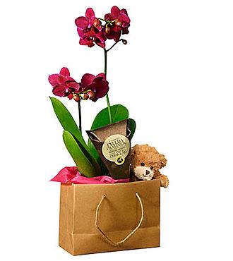 Babybirth Phalaenopsis Orchid