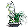 Trendy - Arrangement of Plants