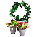 Package - Single plants
