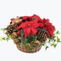 Red Christmas Basket - Large