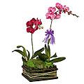 Phalaehopsis Orchid arrangement