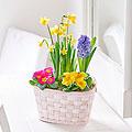 Vibrant Planted Basket