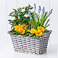 Sunny Skies Planted Basket