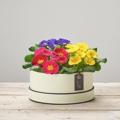 Radiant Primula Hatbox