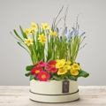 Dazzling Mixed Planted Hatbox