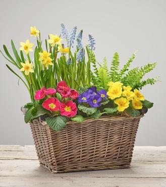Bold Brights Planted Basket