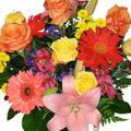 Mixed Cut Flowers