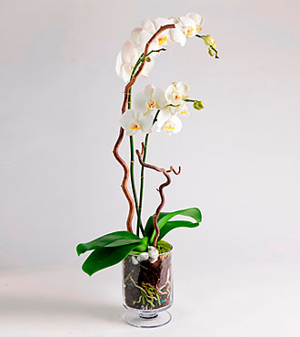 Decorated Orchid in a Glass Pot
