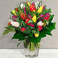 Colore Tulips