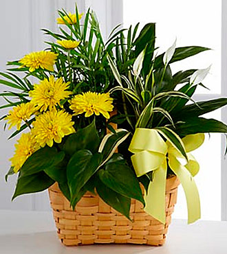 The FTD® Loving Light™ Dishgarden