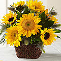 The FTD® Perfect Sun™ Bouquet - Exquisite
