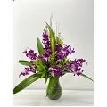 Medium orchid in vase