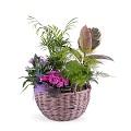 Centerpiece of Plants
