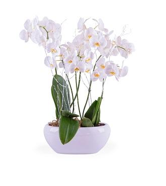 Centerpiece of White Phalaenopsis Plants