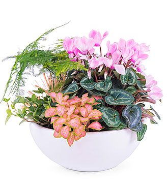 Centerpiece of Mixed Plants