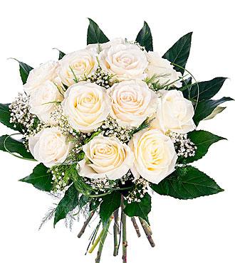 Pureza, 12 Short-Stemmed White Roses