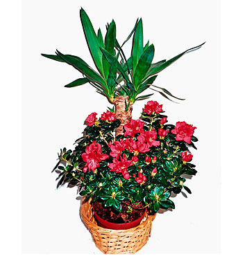 Arrangement of Blooming and Green Plants