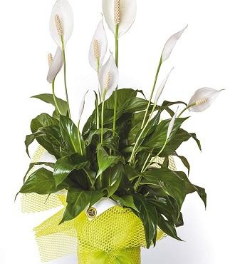 Seasonal Plant