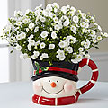 Snowman Surprises Holiday Campanula Plant