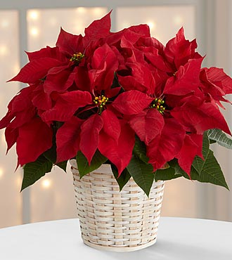 The Red Poinsettia Basket by FTD® (small)