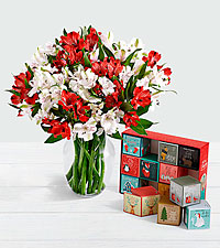 75 Blooms of Candy Cane Peruvian Lilies with 12 Days of Christmas Cocoa