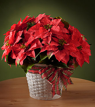 Poinsettia Happiest Holidays