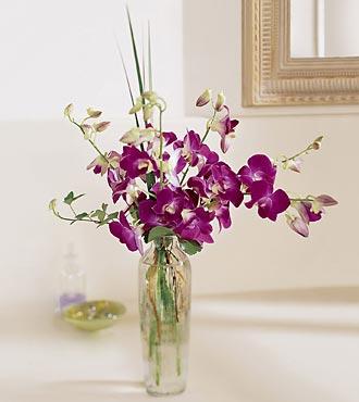 Composition Paradis pacifique avec vase