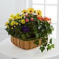 Gentle Blossoms™ Basket
