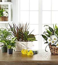 Les plantes en fleurs et plantes vertes dans un panier agencées par un fleuriste FTD®