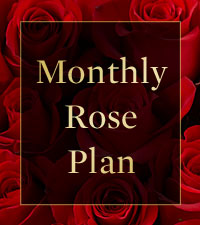 Monthly Rose Plan - 3 Months of Roses