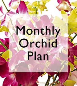 Monthly Orchid Plan - 6 Months
