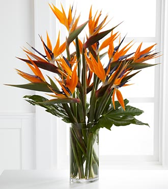 Enticing Luxury Bouquet - VASE INCLUDED