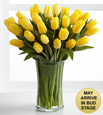 Sunshine's Promise Tulip Bouquet - 30 Stems