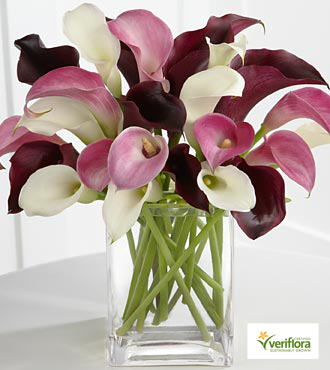 Amethyst Riches Calla Lily Bouquet - 24 Stems - VASE INCLUDED