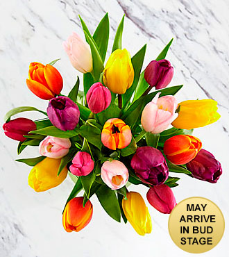 Rush of Color Assorted Tulip Bouquet - 15 Stems - NO VASE