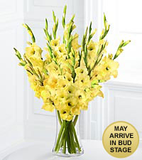 Sweet Sunbeams Gladiolus Bouquet - 10 Stems - VASE INCLUDED