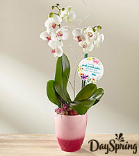 DaySpring® Mother's Day Orchid