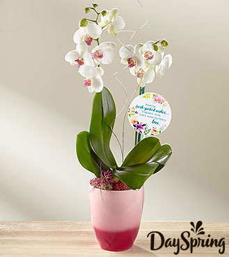 DaySpring® Orchid