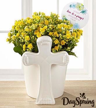 DaySpring® Brighter Days Kalanchoe