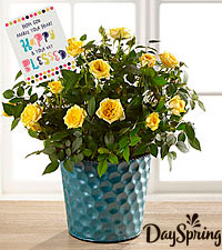 DaySpring® Happy Blessings Mini Rose