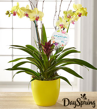 DaySpring® Flowering Faith Orchid