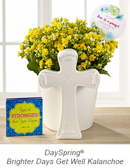 DaySpring® Brighter Days Get Well Kalanchoe with Keepsake Plaque