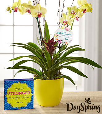 DaySpring® Flowering Faith Orchid  with Keepsake Plaque
